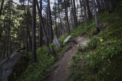 El Comú d'Encamp realitza els treballs silvícoles per a la millora forestal
